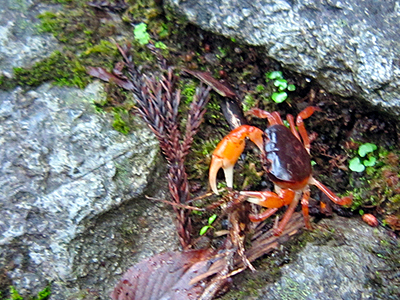 Relaxing moment...  you may find freshwater crab while you're climbing, cheering you up!