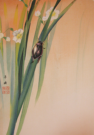 A hibernating insect, Japanese diving beetle, with daffodil.  Painting by Kako Morita.