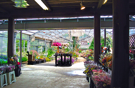 Various cut-flowers are sold inside the site.  You can also pick grown fresh flowers for yourselves!